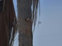 woodpeckercasita